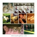 Puppy Collage1